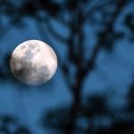 _DSC7038-Earth's moon_1